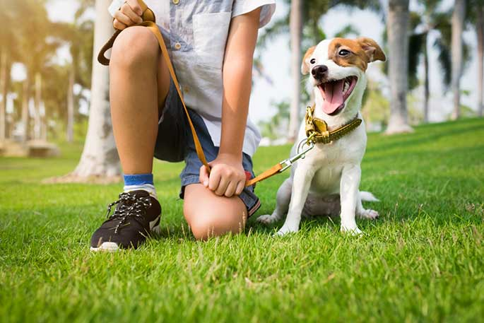 Getting Your Dog on a Good Schedule
