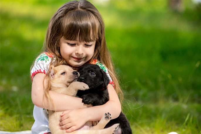 Dogs As Therapists: The Plentiful Benefits That Dogs Bring To Our Lives