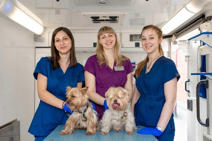 career in animal care