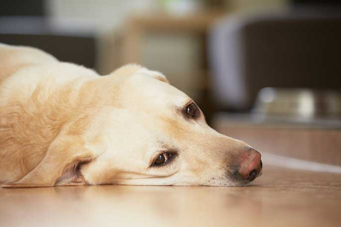 how to tell if your dog is depressed
