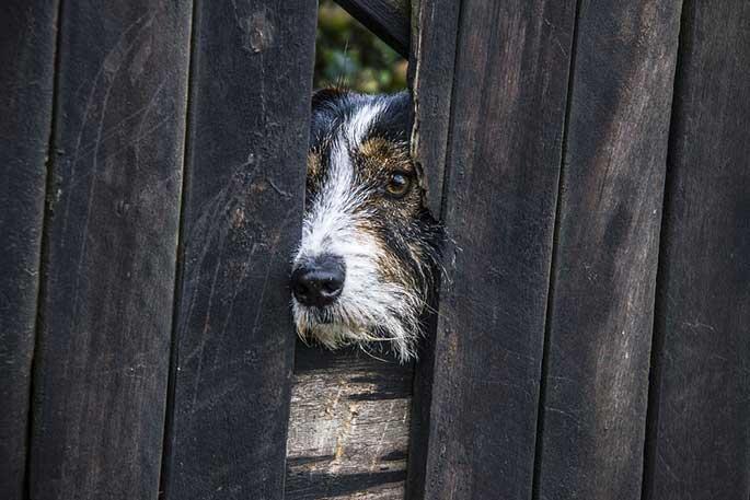 how to treat dog depression
