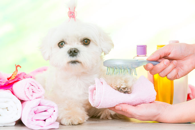 pamper puppy