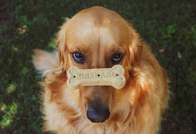 10 Most Obedient Dogs You Could Own