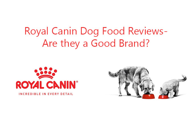 Royal Canin Dog Food Reviews- Are they a Good Brand?
