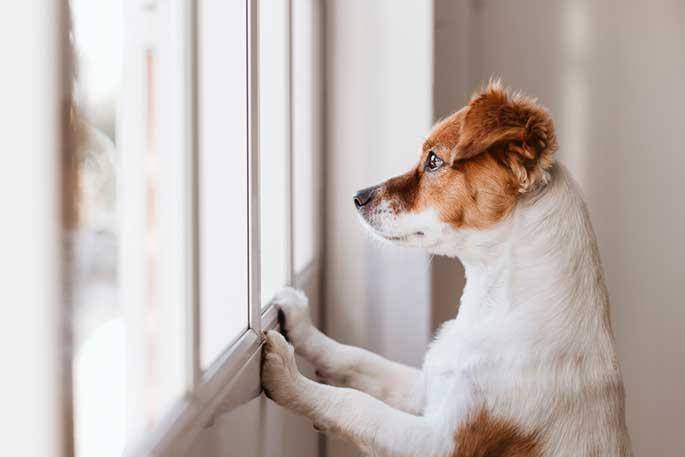 3 Advantages of Using a Pet Food Subscription Service
