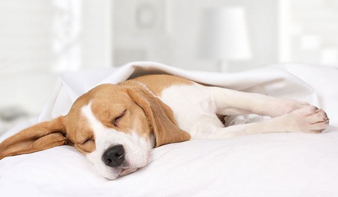 How to Make Sure Your Pet Gets Quality Sleeping Time