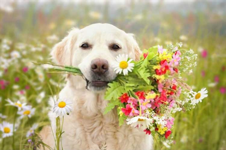 Non-Toxic Flowers That May Be Safe for Your Furry Friend