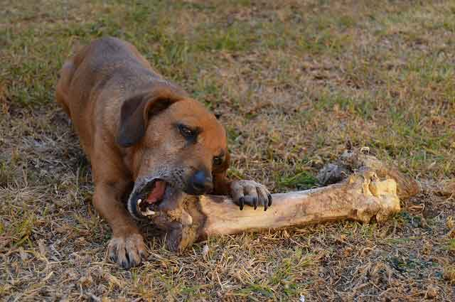 can dogs eat raw meat