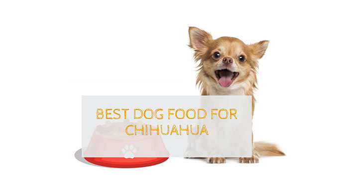 10 Best Dog Food For Chihuahua