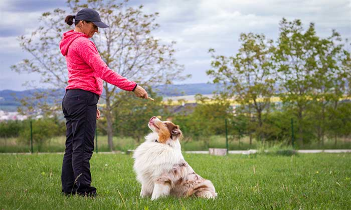 How to Train Dog with Different Types of Wireless Dog Fences