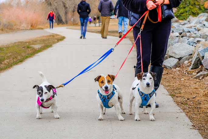 Choosing the Right Collar or Harness For Your Dog
