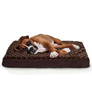 Top 10 Best Dog Beds
