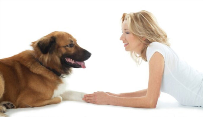 Understanding Dog Talk and Canine Communication