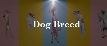 dog-breed-articles