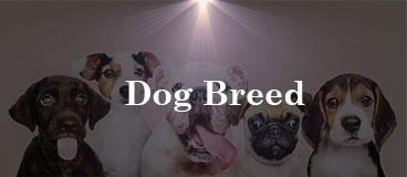 dog breed category image