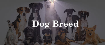dog-breed-review