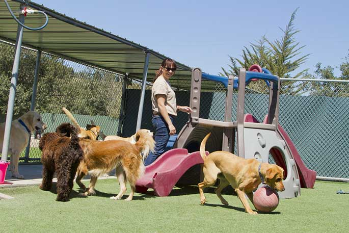 Top 8 Doggy Daycare &  Boarding in Melbourne