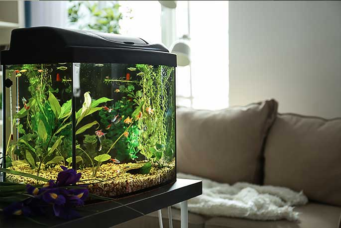 8 Accessories Every Aquarium Needs