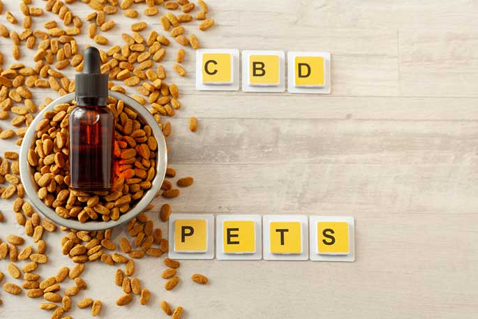 CBD Oil and Your Pets