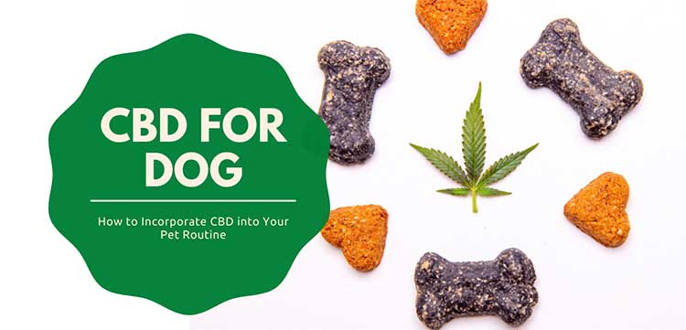 How to Incorporate CBD into Your Pet