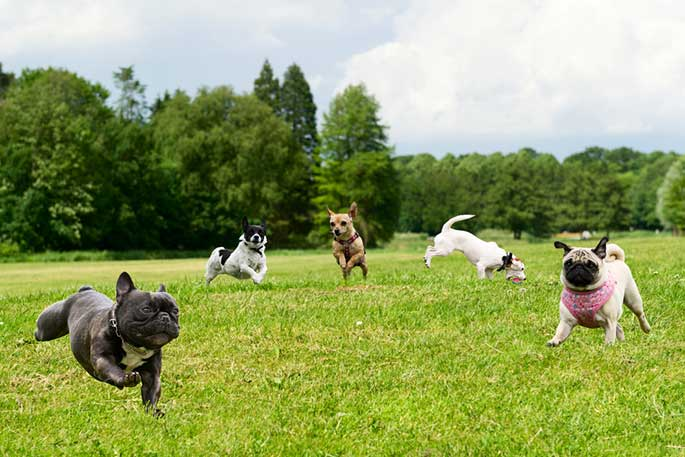 How to Keep Your Dog Park Safe