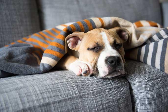 Puppy Is Not Feeling Well