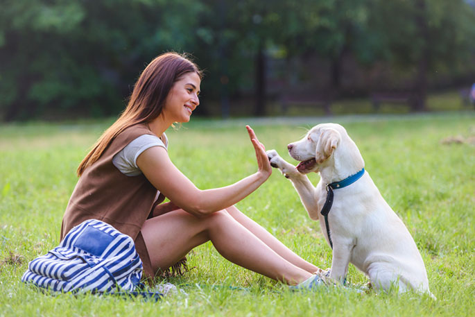 The Importance of Training During Your Dog's Early Life