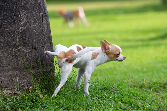 Why Do Dogs Pee on Trees