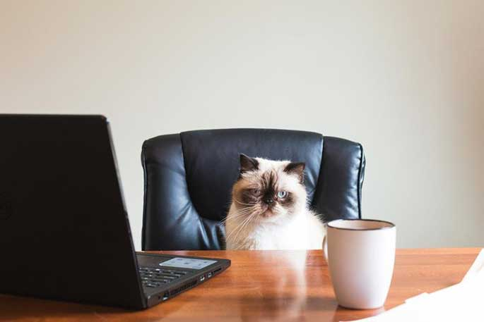 How to Write a Resume for Your Pet