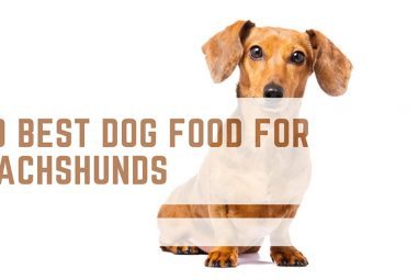 10 Best Dog Food for Dachshunds