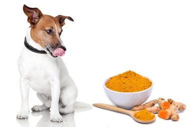 Benefits of Turmeric for Dogs – petdogplanet