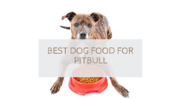 10 Best Dog Food For PitBulls