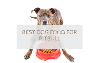 10 Best Dog Food For PitBulls