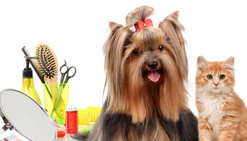 4 DIY Pet Grooming Tips To Keep Your Pooches Clean And Healthy