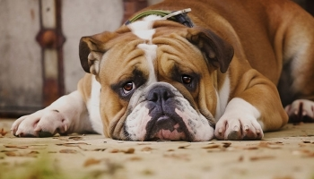 Top 5 Ways to Improve Your Dog's Mental Health