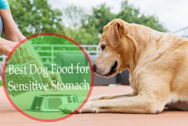 Best Food for Dogs With Sensitive Stomachs