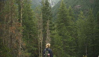 Things That You Need to Know Before Hiking with Dogs