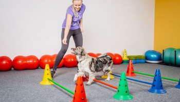 Five Simple Ways to Keep Your Dog Active Indoors