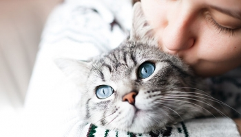 5 Tips On How to Increase Your Cat's Lifespan