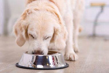 Is Lamb And Rice Dog Food Good For The Dog?