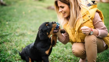 The Most Important Puppy Training Commands