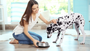 How Much to Feed A Dog – Feeding Guidelines and Advice