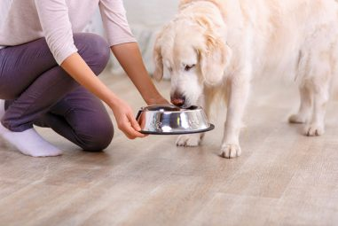 3 Tricks for Switching Dog Food Effectively Without Making Your Dog Sick