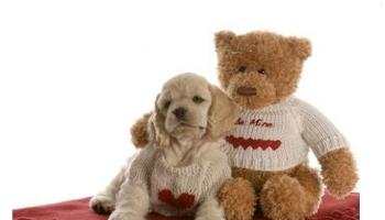 15 Most Beautiful Teddy Bear Dog Breeds