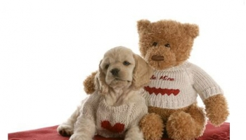 15 Most Beautiful Teddy Bear Dog Breeds