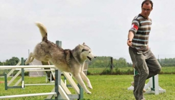 Get a Well-Behaved Pet with Virtual Dog Training