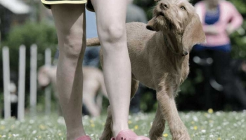 When to Use E-Collars for Training Your Dog