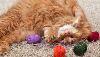 How To Keep Your Cat Happy When You're Out With Interactive Cat Toys