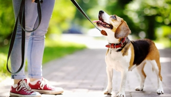 Top 13 Dog Leashes To Buy In 2018