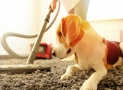 The 10 Best Carpet Cleaner Solutions for Pets in 2020